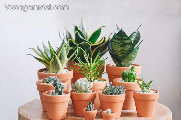 Chậu trồng cây Terracotta