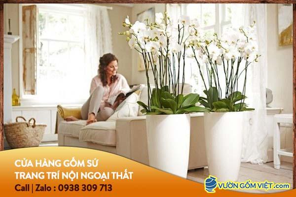 Chọn chậu cây cảnh trang trí phòng khách như thế nào?