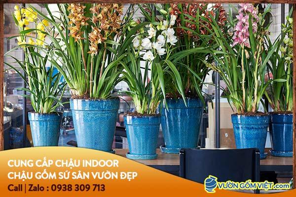 Nhà cung cấp chậu gốm sứ địa lan cho nhà vườn tại Tphcm